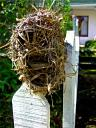 nov-16-18-2009-durban-birds-nest-posed-on-fence.JPG