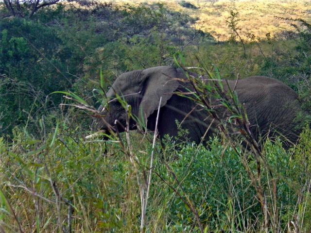 02-july-game-drive-elephant-last-shot-2.JPG