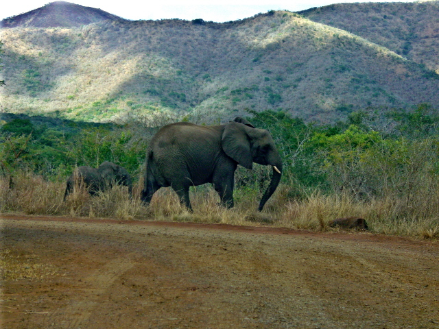 02-july-game-drive-elephants-mother-and-child.JPG