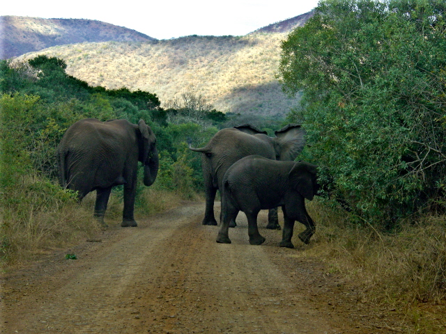 02-july-game-drive-family-elephants-crossing-road.JPG