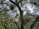 18feb13-bromeliads.jpg