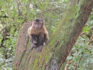 March 2014 - MS - Monkey 2
