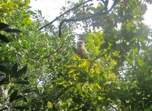 March 2014 - MS - Monkey high in tree