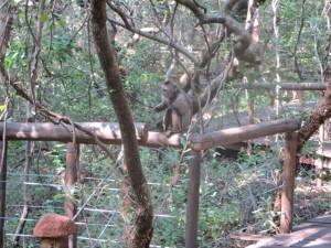 March 2014 - MS - Monkey on rail