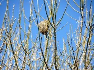 July14 - Birds Nest
