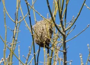 July14 - birds Nest Close
