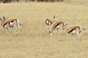 11Aug14 - Springbok