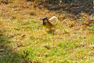 Aug14 - Bird 1