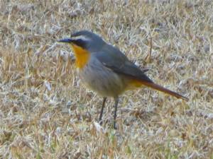 Aug14 - Bird 7