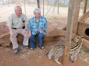 22sep14 - looking at ocelot
