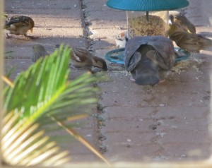 Aug2014 - Birds Feeding 2