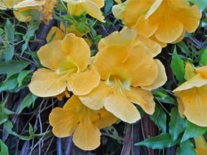 Sept14 - Yellow Flower closeup