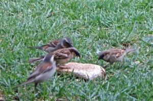 oct14 - birds, bread