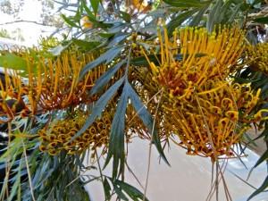 oct14 - golden tree