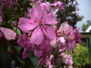 oct14 - pink flowerjpg
