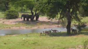 Elephants, impalas and waterbuck