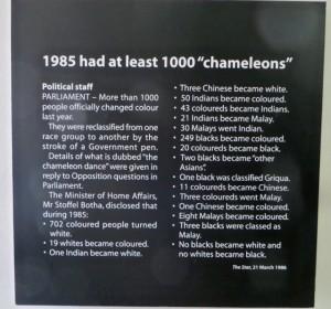 feb15 - Apart Museum - 1000 chameleons