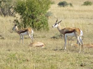 18may15 - drive - Springbok