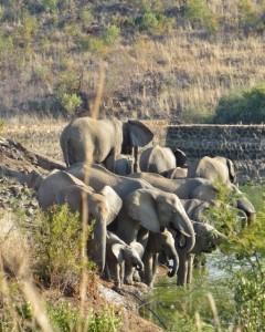 18may15 - drive - elephants herd