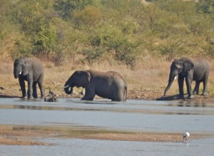 18may15 - drive - elephants near water