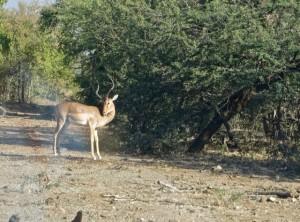 18may15 - drive - impala first