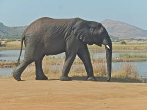 18may15 - drive - wet elephant 2