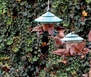 June 2015 - Bird Feeders