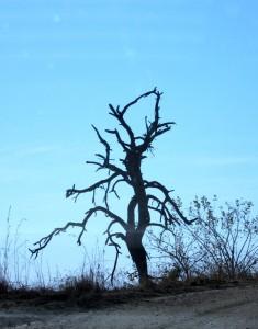 June2015 - Kruger - Dead Tree