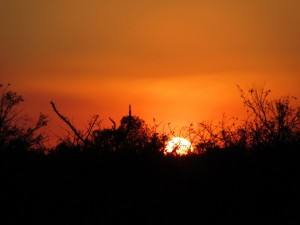 June2015 - Kruger - Sunset drive - sunset