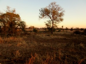June2015 - Kruger - Sunrise with tree